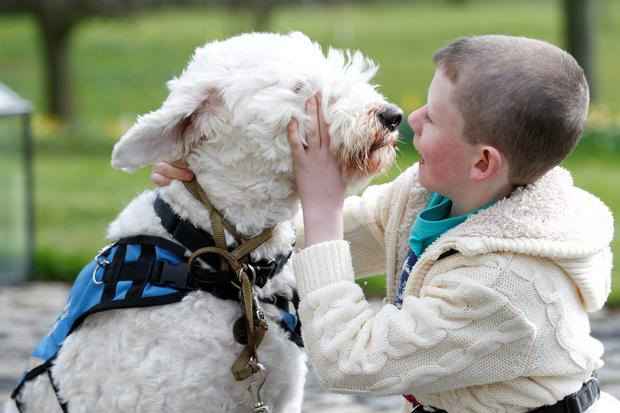 To mark World Autism Day on 2nd May Shane, 8, from Walkinstown Dublin, is pictured with his Assistance Dog Zeta. Shane received Zeta from Irish Guide Dogs in December 2013 and his mother Cathy says that Zeta has brought positive new life to their family; they can now go out together as a family which they never could before. Irish Guide Dogs' Assistance Dog Programme, was forced to close its waiting list in 2014 due to lack of financial support and resources. It currently has more than 100 families on the waiting list. Picture Conor McCabe Photography.