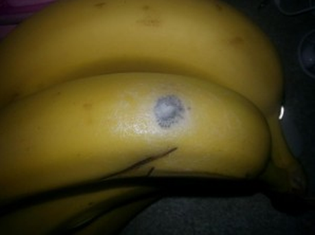 Tesco said spiders found on bananas purchased in Limerick were harmless. Credit: Limerick Post