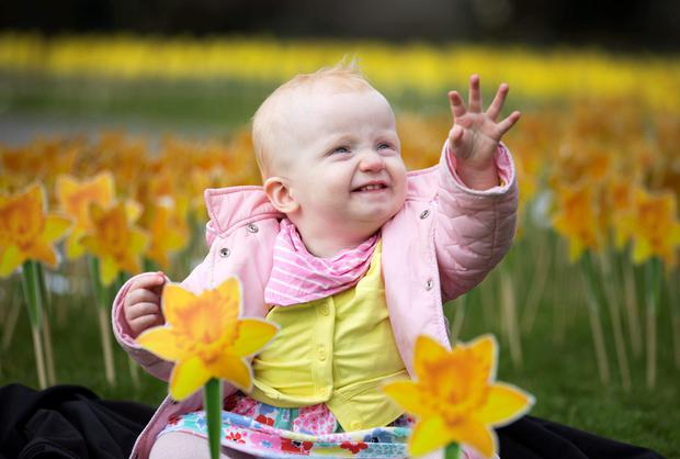 Bonnie O'Meara (14 mths) from Beaumont Co Dublin is pictured in the Irish Cancer Society's Garden of Hope in the Iveagh Gardens Dublin for the Daffodil Day supported by Dell (Andres Poveda)