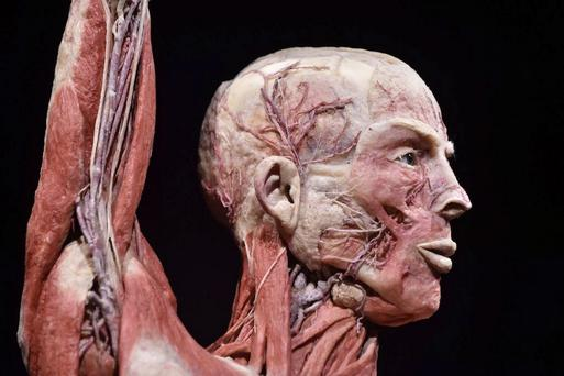 The bodies were used by medical students as part of their anatomy tuition