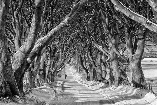 Northern Ireland Game_of_Thrones_Film_Location_-_Stranocum,_Dark_hedges_(Black_&_White).jpg