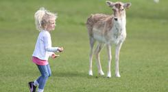 Naoimi Garcia (5) from Madrid feeds the deer in the phoenix park Credit: Damien Eagers