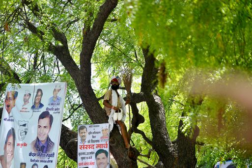 Indian farmer Gajendra Singh stands on a tree before committing suicide during a rally in New Delhi Credit: Chandan Khanna/AFP