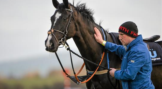 Don Cossack on the gallops ahead of the Cheltenham Racing Festival 2014, as Paul Carberry takes over from AP McCoy (Sportsfile)
