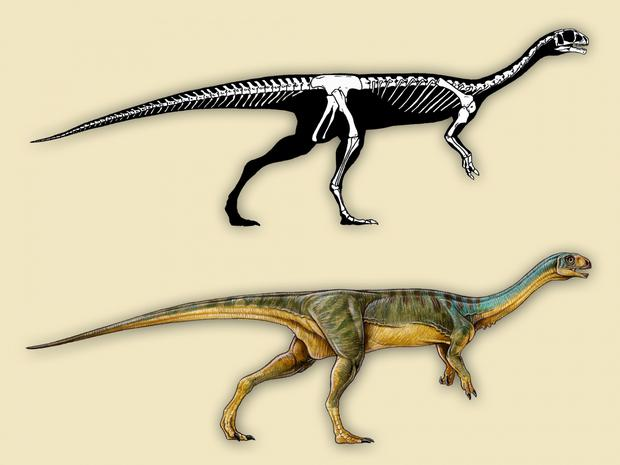 An artist's depiction of Chilesaurus diegosuarezi Credit: Gabriel Lio