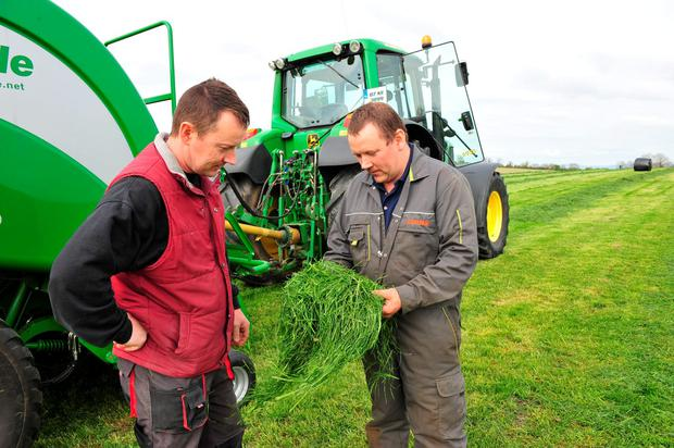First cut: Adrian and Seamus Coogan inspect the first cut of this year's silage being baled for Joseph Hughes, Newtown, Co Carlow. The paddock was closed off on April 1 and yielded six high quality bales per acre at 18pc drymatter Photo: Roger Jones
