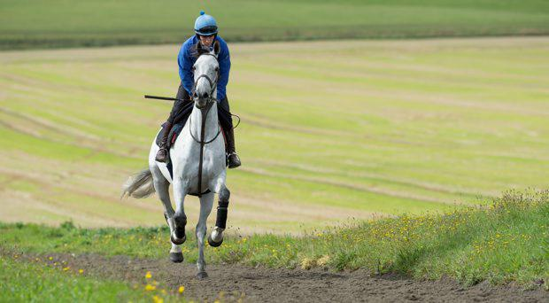 Simonsig (Peter Carberry) canters up the hill at Seven Barrows