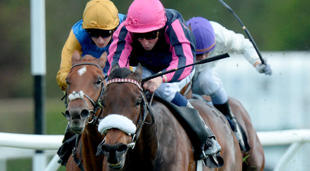 Majestic Queen ridden by William Buick (centre) goes on to win the Betfred Membership 'Play Your Own Way' Chartwell Fillies' Stakes during the Derby Trial Raceday at Lingfield Park Racecourse (Anthony Devlin/PA Wire)