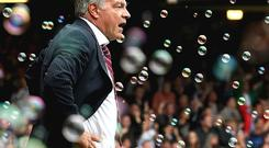 Capital connection: Sam Allardyce could be in line to take over at Fulham Photo: PA