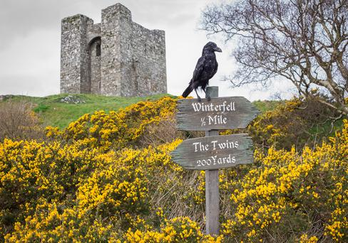 An animatronic raven perches atop of two signs pointing the way to Game of Thrones locations in Northern Ireland.