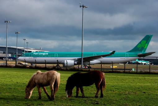 Aer Lingus planes are parked up at Dublin Airport.