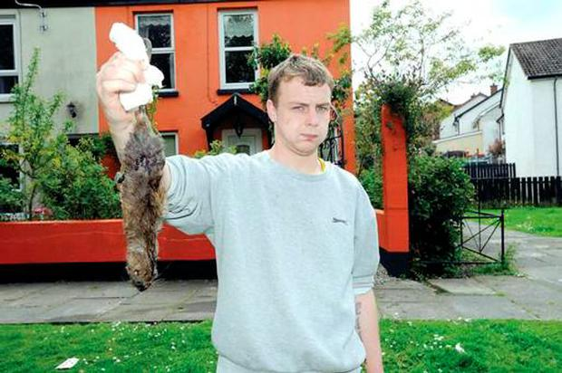 Ryan Stavely holds up a dead rat caught in Killyleagh Pic: Belfast Telegraph