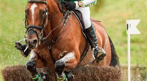 Australia's Sam Griffiths pictured last year on Paulank Brockagh during the Cross Country Test (Sportsfile)