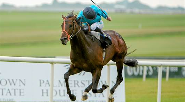 Last year's winner Brown Panther (pictured with jockey Richard Kingscote) and the unbeaten Forgotten Rules are two of the star names among 48 entries for the Palmerstown House Estate Irish St Leger at the Curragh on September 13 (Pat Murphy / SPORTSFILE)