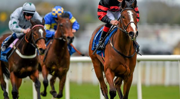 Newsletter, here winning at the Curragh last season, can win again at the track