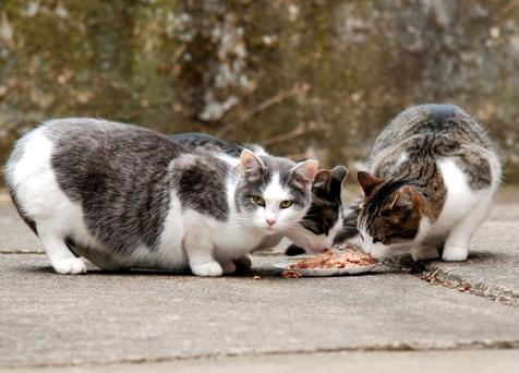 Residents say the feral cats are keeping the local rats under control