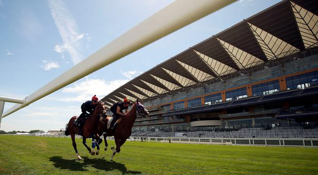 California Chrome (right) does a piece of work at Ascot under Frankie Dettori before being ruled out