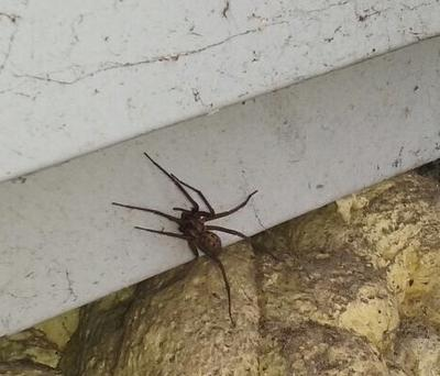 The giant spider was spotted in the Ringsend area of Dublin
