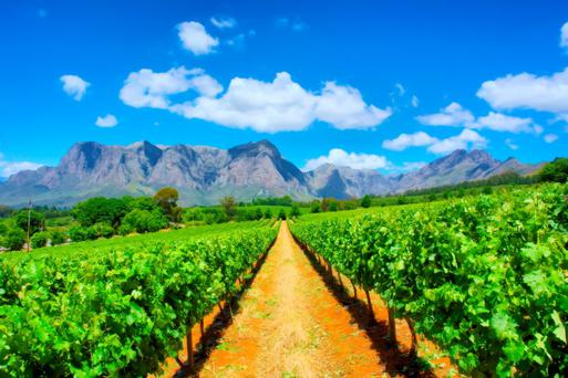 Vineyards near Cape Town, Western Cape, South Africa. Deposit Photos.