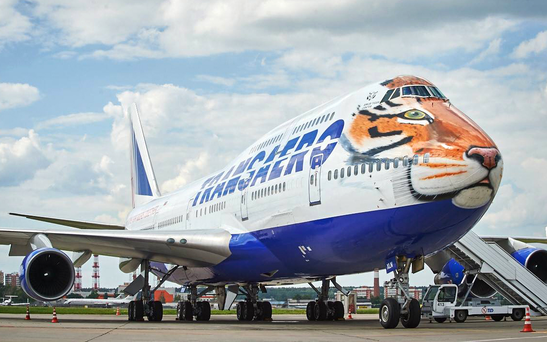 'Tiger Flight', a Transero plane re-painted to highlight the issue of Amur tiger conservation in Russia. Photo: Transaero/Facebook