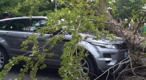 A Range Rover was damaged by a falling tree