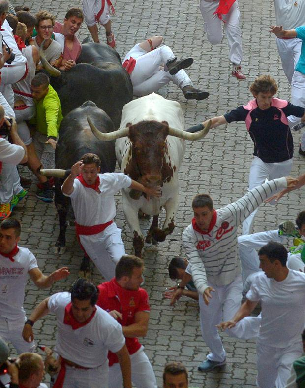 Runners sprint in front of Jandilla fighting bulls at the entrance to the bullring during the first running of the bulls of the San Fermin festival in Pamplona, northern Spain, July 7, 2015. Two runners were gored in the run that lasted 2 minutes and 23 seconds, according to local media. REUTERS/Vincent West