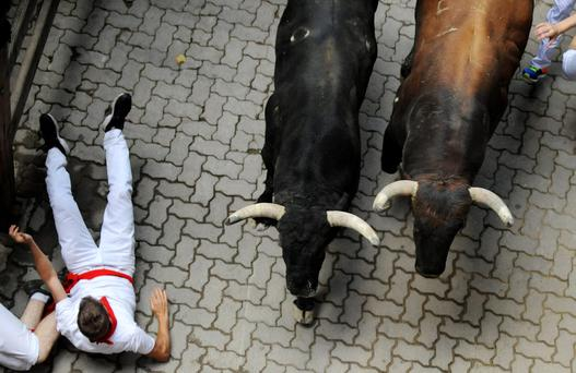 A runner falls in front of Tajo y la Reina fighting bulls at the entrance to the bullring during the second running of the bulls of the San Fermin festival in Pamplona, northern Spain, July 8, 2015. One runner was gored in the run that lasted 2 minutes and 14 seconds, according to local media. REUTERS/Eloy Alonso