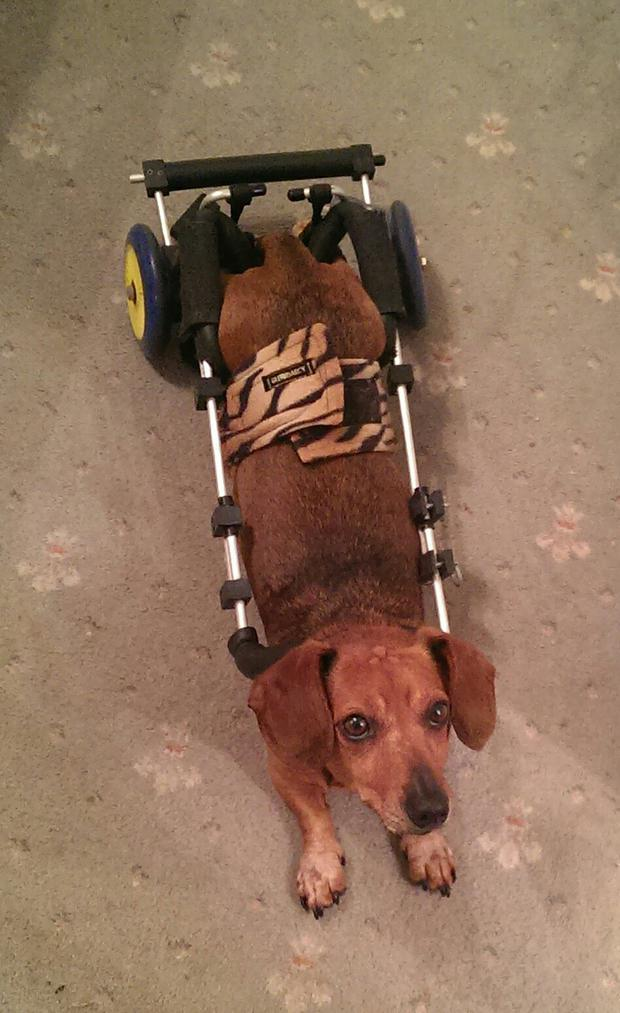 Theo in his custom made wheelchair