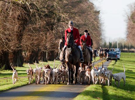 Ahead of the pack: The Tipperary Foxhounds are the only pack in Ireland to hunt four days a week.