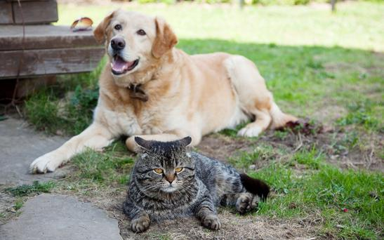 Pets in the Spanish town deserve to be represented too, said its mayor