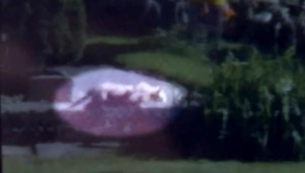 An image from a clip taken on Tuesday night showing the 'lion'