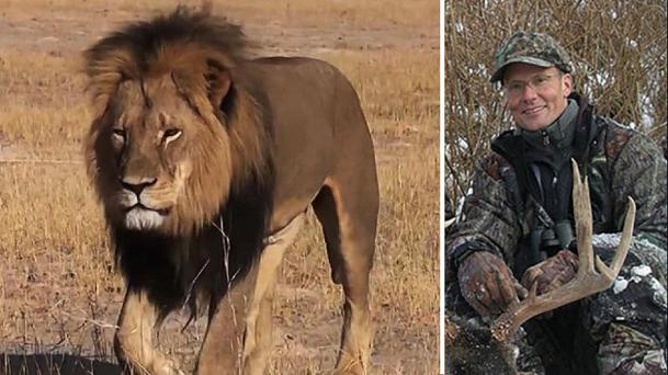Cecil the Lion was lured from the Hwange National Park and shot dead by US dentist Walter James Palmer