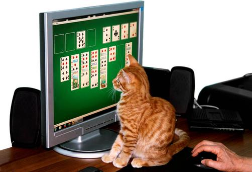 Kitten sitting in front of computer and helps play solitaire