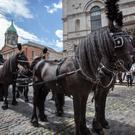 The horse drawn hearse which took part in the Reenactment of the O'Donovan Rossa funeral at Dublin Castle. Photo: Tony Gavin