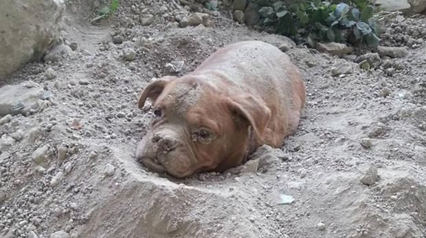 Dog found buried alive (Photo: Facebook/Pedro Dinis)
