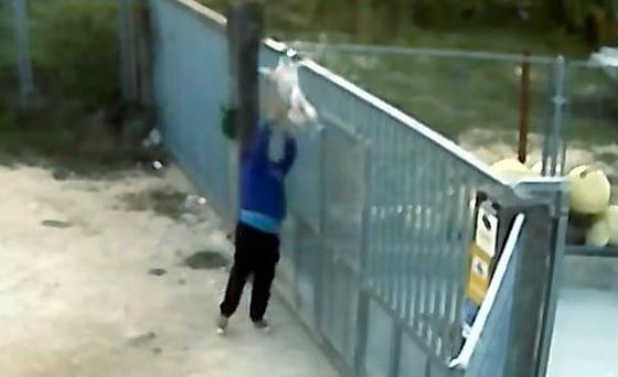 One man can be seen trying to fling the dog straight over the gate