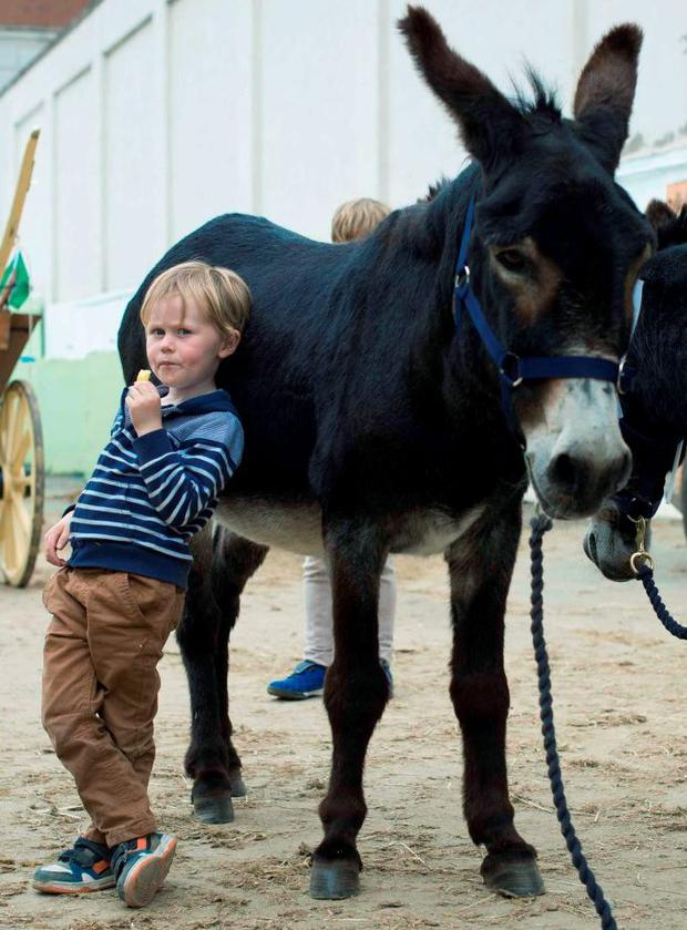 Danny Phipps Rooney (4), from Ballymore Eustace, Kildare, snuggles up to Cuddles, the overall winner of the Donkey Display, on the last day of the Dublin Horse Show at the RDS. Photo: El Keegan