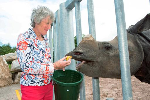 Margaret Sinanan feeds Jamil, a 2-year-old Indian Rhino