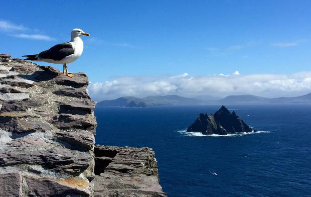 MG Birds eye view of Skellig Beag.jpeg