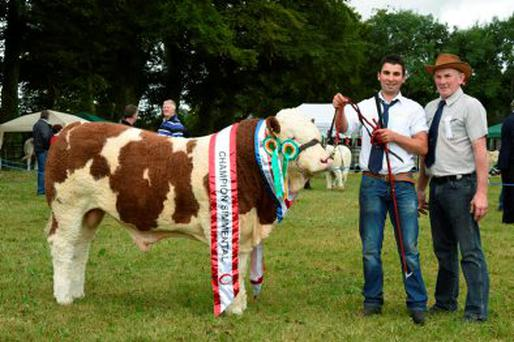 Nigel Hogan, Rathnashannagh, Bennekerry, Co Carlow with 'Rathnashan Geary' the champion Simmental at the Tullow Show, and with Judge Peter O Connell. Photo: Roger Jones.