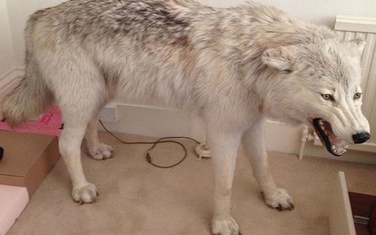 A stuffed Arctic wolf worth over £32,000 has been stolen from a property in London