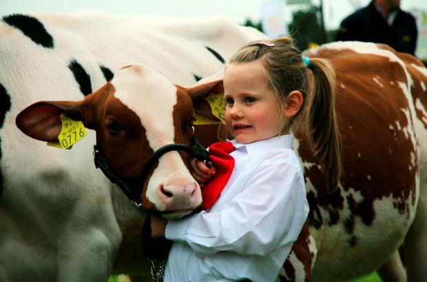 Zoe Greenan (4) and her calf Greenlay Leonei at the 74th Virginia Agricultural Show in Cavan Photo: Lorraine Teevan