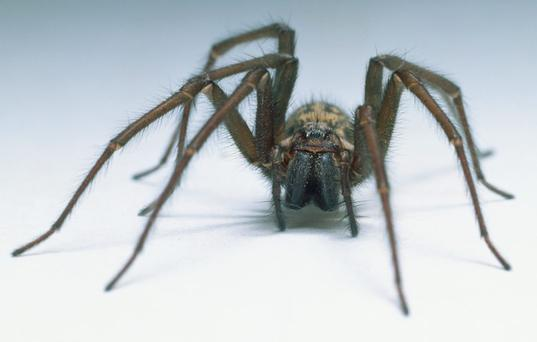 The spider in question has not been identified