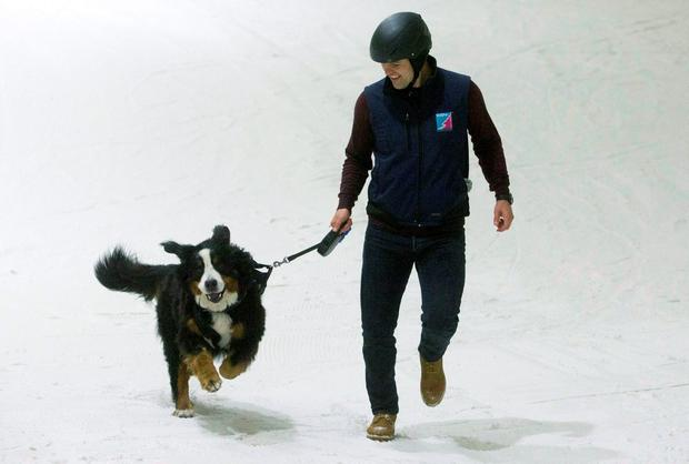 Terminally-ill dog Angus, with Allan Birse, enjoying a final play in the snow at at Snow Factor Braehead near Glasgow, after his owners created a