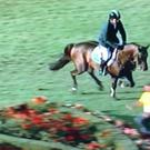 A steward narrowly avoids Cian O'Connor and Good Luck