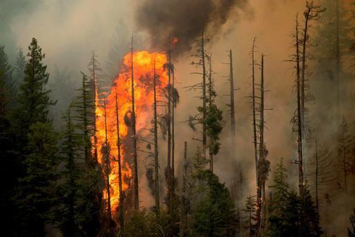 Treetops burn during the Wolverine Fire near Holden, Washington in this U.S. Forest Service photo taken August 15, 2015 and released to Reuters August 21, 2015. REUTERS/Kari Greer/U.S. Forest Service/Handout