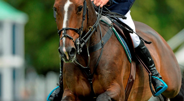 Denis Lynch finished 17th at the FEI European Championships in Aachen yesterday