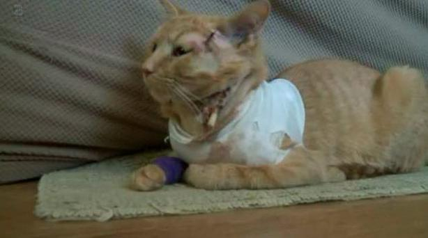 Opie the cat suffered injuries but is expected to make a full recovery Credit: Fox43