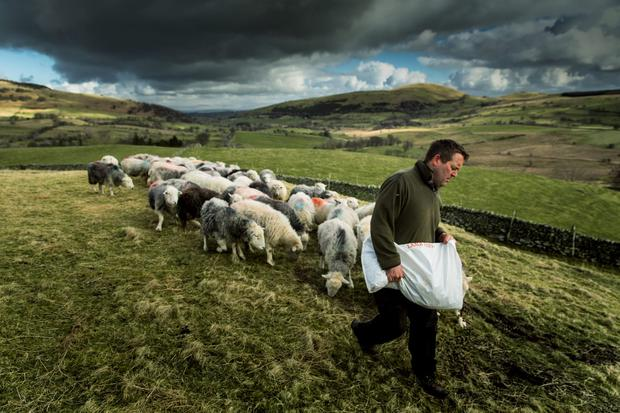 Shepherd James Rebanks working on his farm at Matterdale End in Cumbria. Photo: Christopher Thomond/Guardian