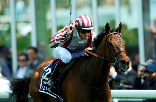 Cirrus Des Aigles, under the guidance of Christophe Soumillon, can make his first visit to these shores a winning one today